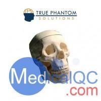 WEK-Head成人头骨模体定制