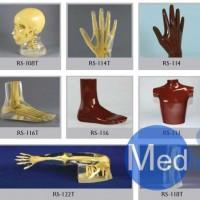 美国RSD人体部分模体