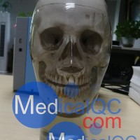 WEK-7300带颈椎头模,CBCT真人骨头模